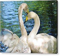 Beautiful Swans Acrylic Print by Paulette Thomas