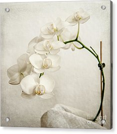 Beautiful White Orchid II Acrylic Print by Hannes Cmarits