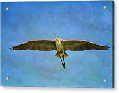 Beauty Of Flight Textured Acrylic Print by Deborah Benoit