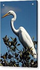 Beauty Of Sanibel Acrylic Print by Karen Wiles