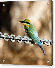 Beauty On Chains Acrylic Print by Mr Bennett Kent