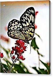 Beauty Wing Acrylic Print by Marty Koch