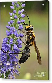 Bee Kind Acrylic Print by Kathy Baccari