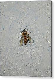 Bee Acrylic Print by Michael Creese