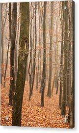 Beech Wood In Autumn Acrylic Print by Anne Gilbert