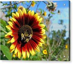Bees At Work Acrylic Print by Jim Hughes