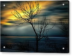 Beginnings Acrylic Print by Gary Smith