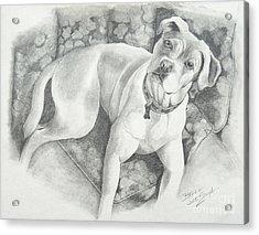 Bella My Pup Acrylic Print by Joette Snyder