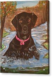 Bella Swimming Acrylic Print by Melanie Wadman