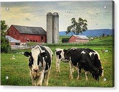 Belleville Amish Farm Acrylic Print by Lori Deiter