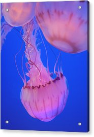 Below The Surface 2 Acrylic Print by Jack Zulli