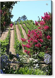 Benziger Winery In The Sonoma California Wine Country 5d24495 Vertical Acrylic Print by Wingsdomain Art and Photography
