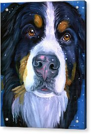 Bernese Mountain Dog In Snowfall Acrylic Print by Lyn Cook