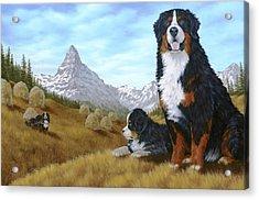 Bernese Mountain Dog Acrylic Print by Rick Bainbridge
