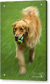 Best Friend Oakley Acrylic Print by Roger Bailey
