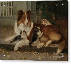 Best Of Friends Acrylic Print by Wilhelm Schwar