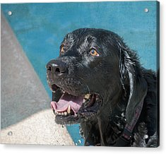 Bette All Wet Acrylic Print by Diane Wood