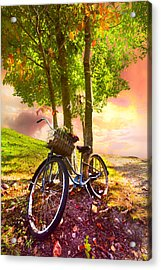 Bicycle Under The Tree Acrylic Print by Debra and Dave Vanderlaan