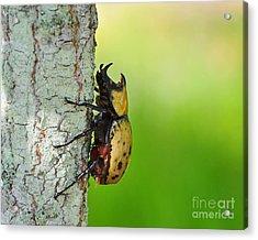 Big Bad Beetle Acrylic Print by Al Powell Photography USA