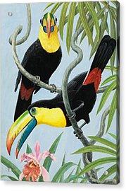 Big-beaked Birds Acrylic Print by RB Davis
