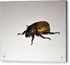 Big Beautiful Beetle Acrylic Print by Al Powell Photography USA