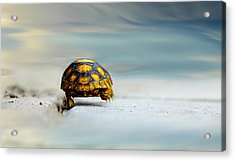 Big Big World Acrylic Print by Laura Fasulo