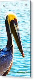 Big Bill - Pelican Art By Sharon Cummings Acrylic Print by Sharon Cummings