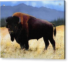 Big Bison Acrylic Print by Robert Foster