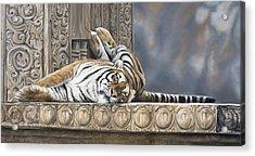 Big Cat Acrylic Print by Lucie Bilodeau