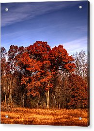 Big Red Acrylic Print by Thomas Young