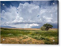 Big Sky And Tree Acrylic Print by Peter Tellone