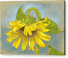 Big Sunflower Acrylic Print by Tracie Thompson