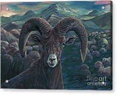 Bighorn Sheep Acrylic Print by Tom Blodgett Jr