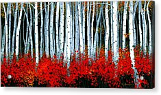 Birch 24 X 48  Acrylic Print by Michael Swanson