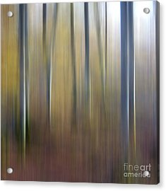 Birch Trees. Abstract. Blurred Acrylic Print by Bernard Jaubert