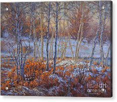 Birches In First Snow Acrylic Print by Fiona Craig