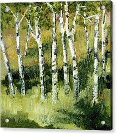 Birches On A Hill Acrylic Print by Michelle Calkins