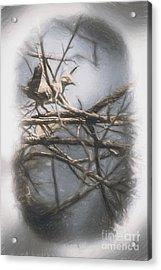Bird From Woodslost Way Acrylic Print by Jorgo Photography - Wall Art Gallery
