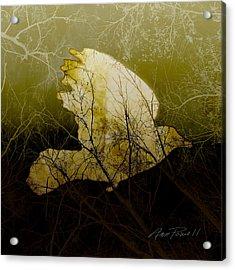 Bird IIi Acrylic Print by Ann Powell