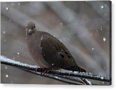 Bird In Snow - Animal - 011312 Acrylic Print by DC Photographer