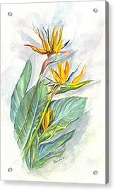 Bird Of Paradise Acrylic Print by Carol Wisniewski