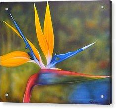 Bird Of Paradise Acrylic Print by Darren Robinson