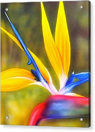 Bird Of Paradise Revisited Acrylic Print by Darren Robinson