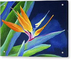 Bird Of Paradise Acrylic Print by Stephen Anderson