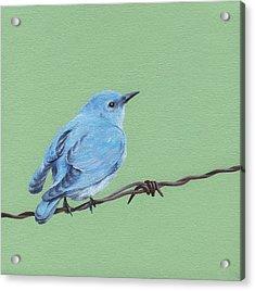 Bird On A Wire Acrylic Print by Natasha Denger