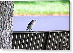 Bird On Bench Acrylic Print by Aimee L Maher Photography and Art Visit ALMGallerydotcom