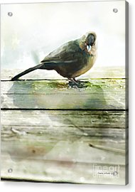 Bird On The Deck Acrylic Print by Artist and Photographer Laura Wrede