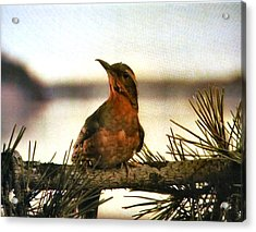 Bird On The Wire Acrylic Print by Luis Ludzska