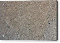 Bird Tracks Acrylic Print by Steven Ralser