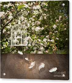 Birdcage With Feathers Acrylic Print by Amanda And Christopher Elwell